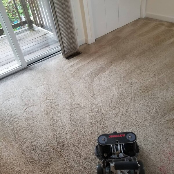 Before & After Carpet Cleaning in Charlottesville, VA (5)